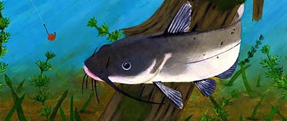 Catfish 566 239px