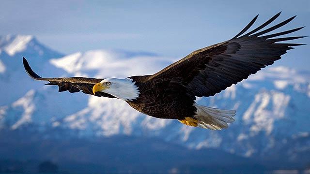 Eagle Sky 640 360px