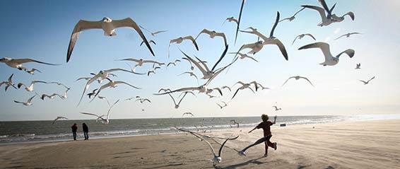 Seagulls 566 239px