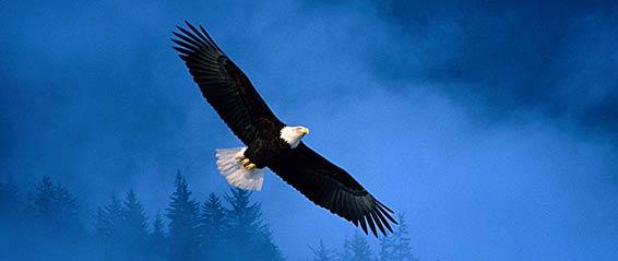 Eagle Blue Sky 566 239px