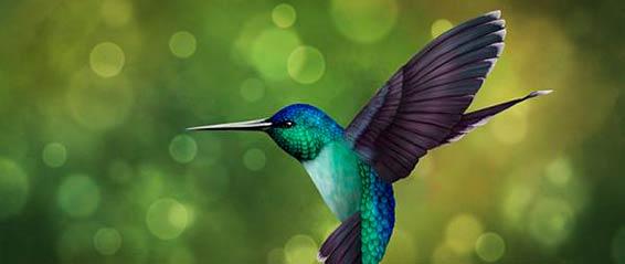 Hummingbird 566 239px
